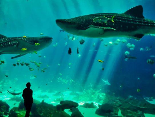 Große Walhaie und Feuerwerk im Stonemoutain Park